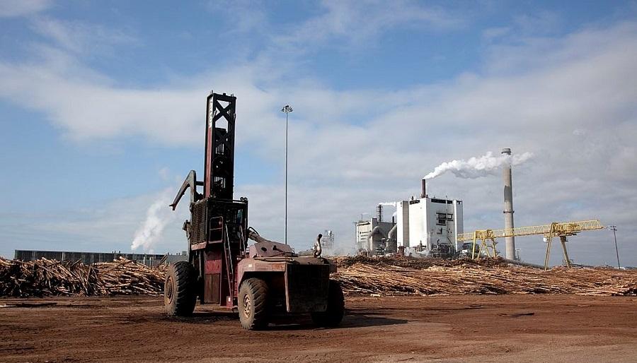 El proyecto EUCALIVA busca nuevas vías d evalorización de residuos de la industria papelera