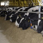 Residuos de la industria cervecera para alimentar animales