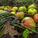REFRESH: Una comunidad de expertos online contra el desperdicio alimentario