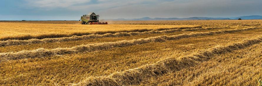 Paja de trigo para sustituir componentes plásticos en las baterías de litio