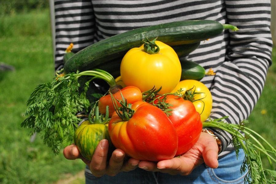 Proyecto para cuantificar el impacto de las iniciativas para compartir alimentos
