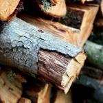 La biomasa puede atender la demanda energética de España de casi un mes