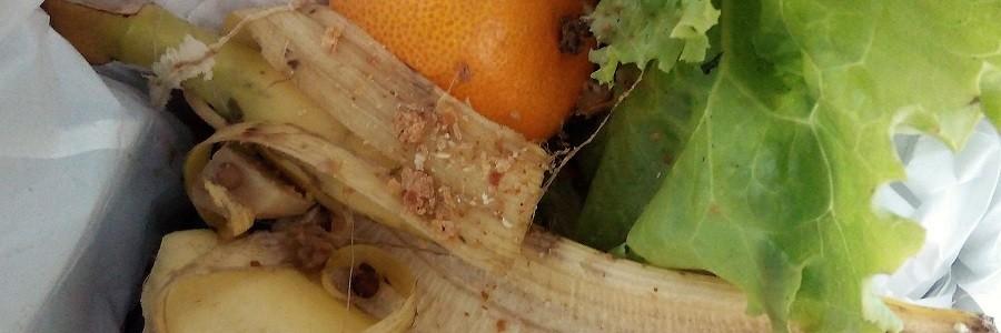 Investigan métodos que ayuden a neutralizar el olor de los residuos en el proceso de compostaje