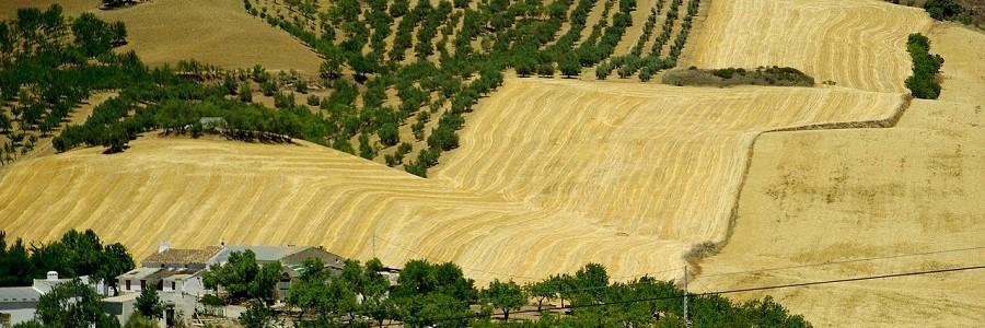 """El Gobierno andaluz destaca su apuesta para """"transitar progresivamente hacia la economía circular"""""""