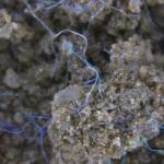 Contaminación terrestre por microplásticos, un riesgo subestimado