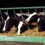 Nueva norma sobre la clasificación como subproductos de los residuos agroalimentarios destinados a la alimentación animal