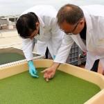 De residuo ganadero a materia prima para piensos y biofertilizantes