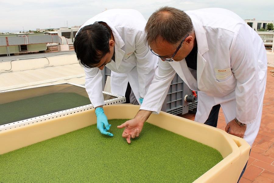 El proyecto Lemna aprovecha residuos ganaderos para obtener nuevos productos