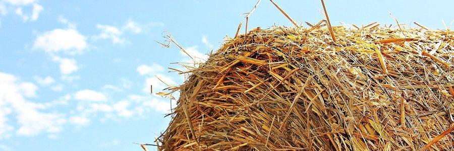 Una investigación de la Universidad de León propone la valorización de residuos agrarios mediante pirólisis