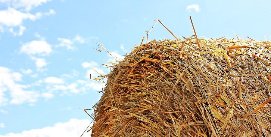 Proponen procesos de pirólisis para valorizar residuos agrarios