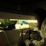 Microalgas y bacterias para producir energía renovable y reducir las emisiones de gases de efecto invernadero
