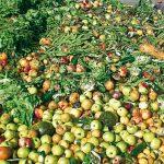 Gipuzkoa desperdicia 123.000 toneladas de alimentos al año