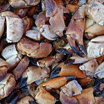 Cáscaras de cangrejo y fibras de árboles para sustituir al plástico en envases alimentarios