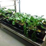 NEIKER-Tecnalia desarrolla métodos biológicos para recuperar suelos contaminados