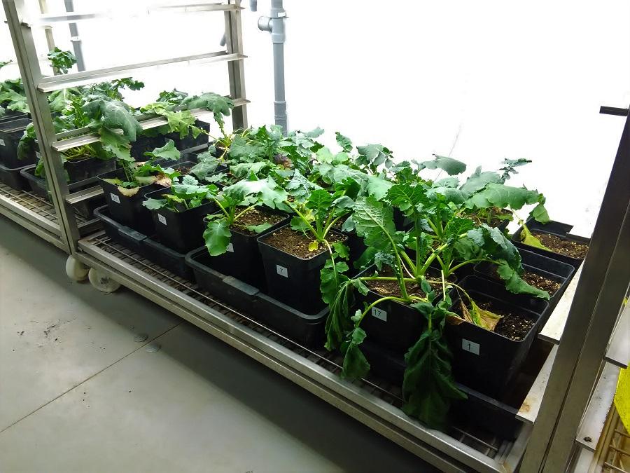 Investigan el uso de plantas y microorganismos para recuperar suelos contaminados
