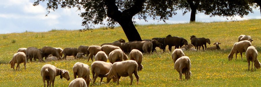 Extremadura subvencionará a las empresas que implanten medidas de economía circular