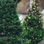 Las agujas de pino de los árboles de Navidad se pueden convertir en pinturas y edulcorantes