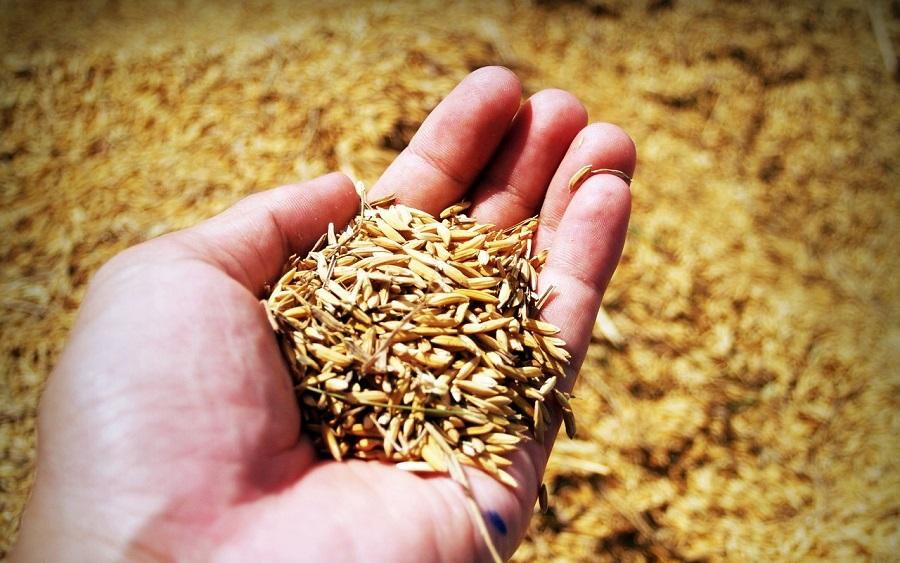 Nanomateriales a partir de cáscara de arroz