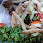 ITENE desarrolla nuevas técnicas de valorización de residuos orgánicos