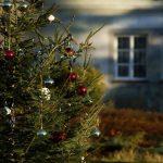 Madrid recogerá los árboles de Navidad para replantarlos