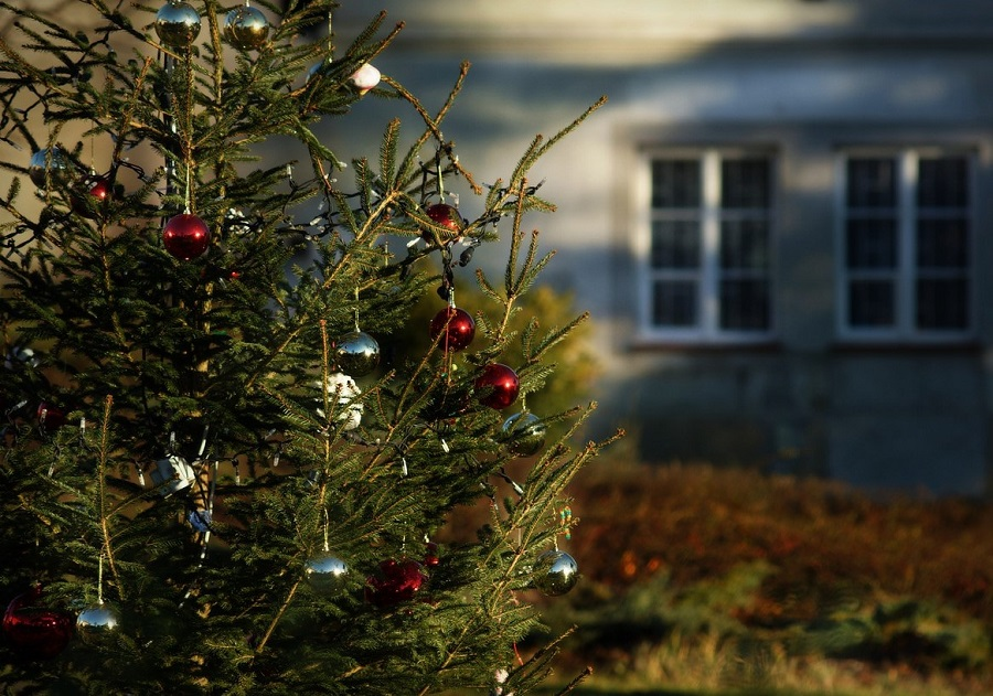 Madrid replantará los árboles de Navidad