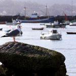 Recogidos 63.000 kilos de residuos de los fondos marinos de los puertos gallegos