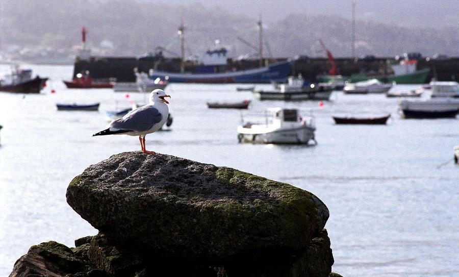 Nueva campaña de limpieza en los puertos de Galicia