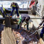 RepescaPlas continuará en su segundo año buscando una nueva vida a los residuos recuperados del mar
