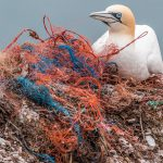 Sevilla acogerá un foro internacional sobre basuras marinas y economía circular