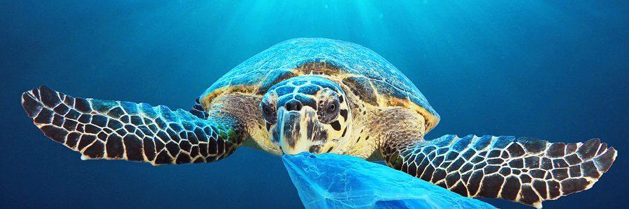 El Parlamento Europeo aprueba prohibir los plásticos de un solo uso en 2021
