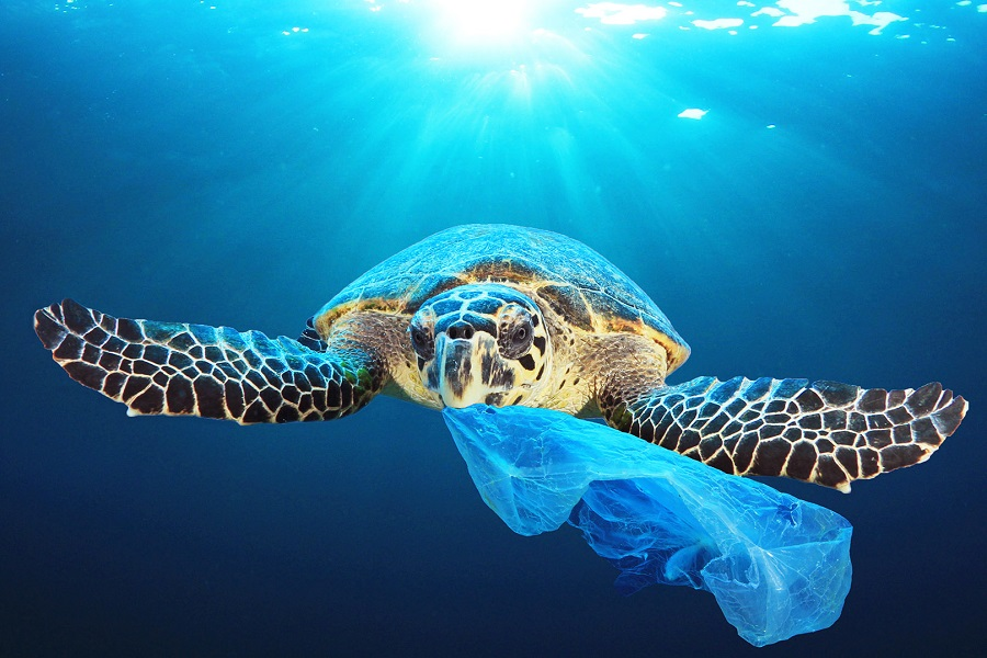 prohibidos los plásticos de un solo uso a partir de 2021