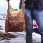 ¿Cuánto duran en el medio ambiente las bolsas biodegradables?