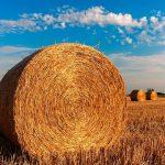 Cómo convertir residuos de paja de trigo en sustancias químicas ecológicas