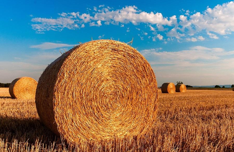 proyecto para aprovechar la paja de trigo