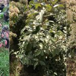 Investigan la producción de compost con sedimentos y residuos de plantas marinas