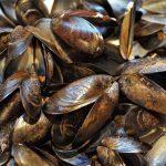 Conchas de moluscos para purificar aguas contaminadas con metales pesados