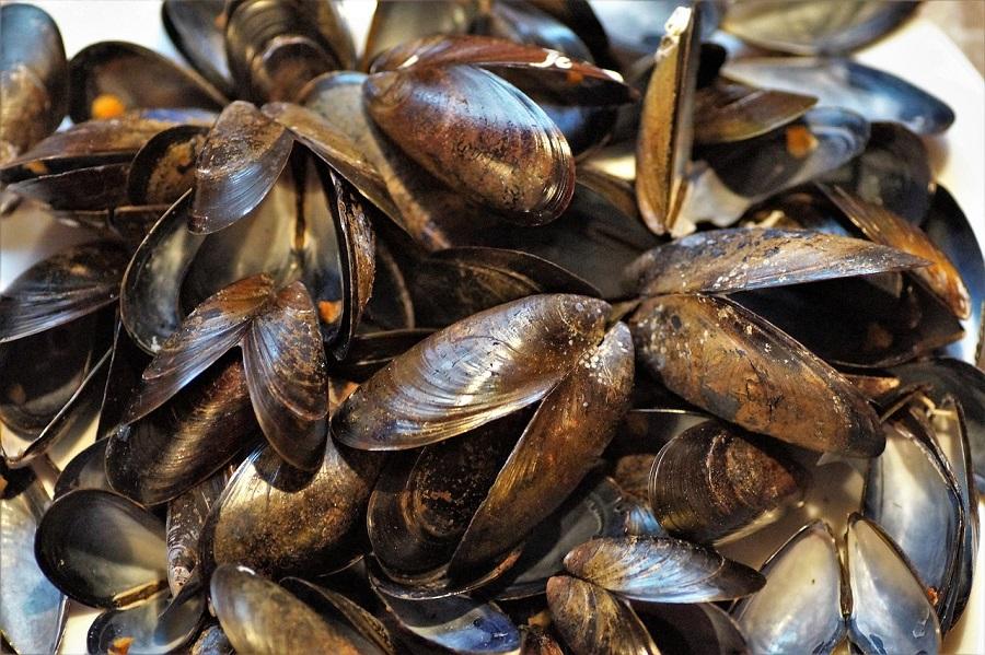 Conchas de moluscos servirían para descontaminar aguas