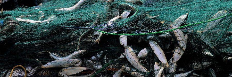 Azti investigará la valorización de subproductos del sector pesquero