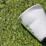Tecnalia organiza en Madrid una jornada sobre reciclabilidad y biodegradabilidad de los plásticos