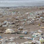 Un nuevo estudio alerta del grave impacto ambiental de la industria del plástico