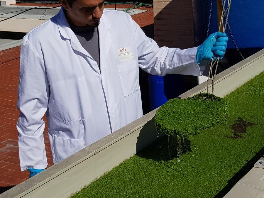 El proyecto LIFE LEMNA propone recuperar los nutrientes de purines con el cultivo de lentejas