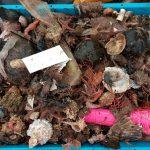 Los residuos marinos invaden las redes de pesca en áreas cercanas a las ciudades