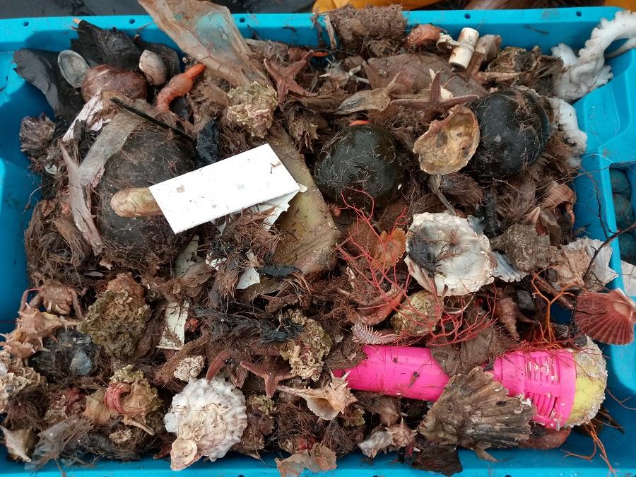 Los residuos marinos llenan las redes de pesca en zonas muy pobladas