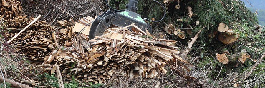 Desarrollan una tecnología que permite conocer la calidad de la biomasa al momento