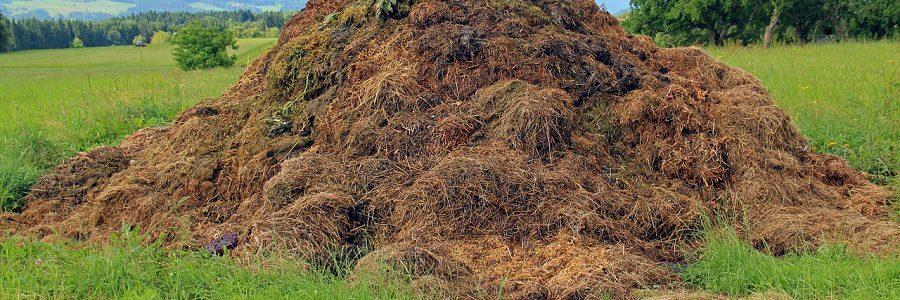 El tratamiento térmico de residuos ganaderos permite reducir las emisiones de CO2 hasta un 97%