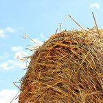 Desarrollan ingredientes ecológicos para fabricar jabón a partir de residuos agrícolas