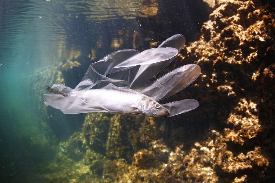 Estudian la relación entre plancton y plásticos en el mar
