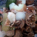Castellón incluye a los comedores escolares en la recogida selectiva de materia orgánica