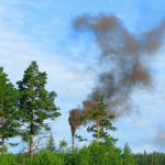 La naturaleza, mejor que la tecnología para combatir la contaminación del aire