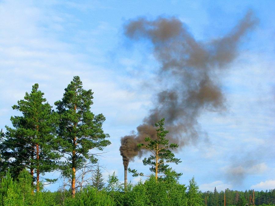 La naturaleza podría ser el mejor aliado contra la contaminación del aire
